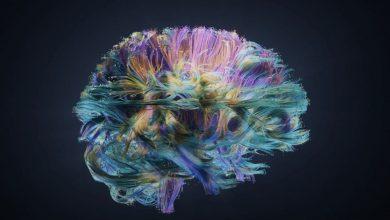 كيف تساعد علوم الأعصاب في حماية الذكاء الاصطناعي من الهجمات السيبرانية؟