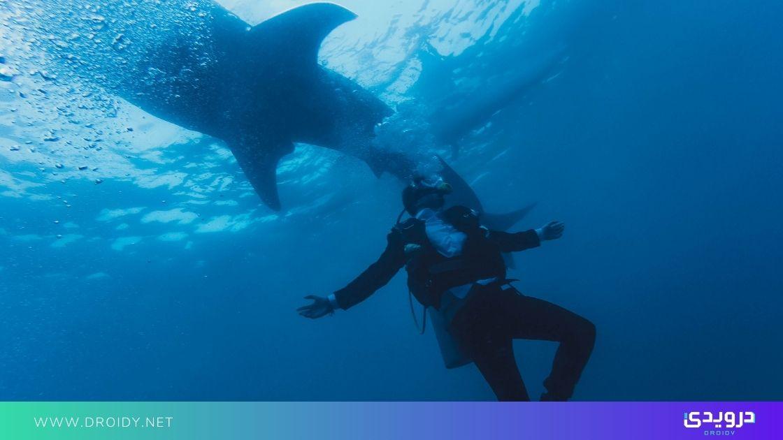 التكنولوجيا الحديثة تساعد في منع هجمات أسماك القرش على البشر